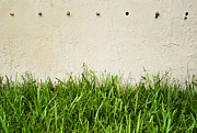 Holes Posters - Green grass against wall Poster by Blink Images
