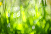 Blurred Framed Prints - Green grass in sunshine Framed Print by Elena Elisseeva