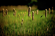 Chris Lord - Green Grow The Rushes O