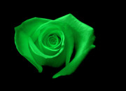 Kelly Digital Art Posters - Green Heart-Shaped Rose Poster by Glennis Siverson