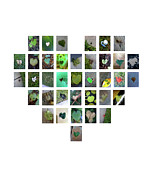 Boy Sees Hearts Digital Art - Green Hearts by Boy Sees Hearts