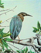 Sharon Tabor - Green Heron