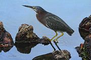 Green Heron Visiting The Pond Print by Deborah Benoit