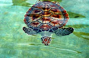 Green Sea Turtle Photos - Green Highlighted by Stacey Robinson