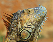 Blooded Prints - Green Iguana Print by Tony Beck