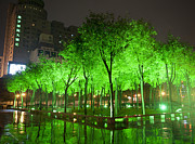 Green Color Art - Green Illuminated Trees, China by Shanna Baker