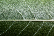 (c) 2010 Photo Prints - Green Leaf Geometry Print by Ryan Kelly