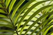 Olia Saunders Metal Prints - Green Leaves 2 Close-up Metal Print by Design Remix