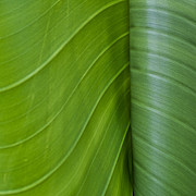 Green Foliage Posters - Green Leaves Series  6 Poster by Heiko Koehrer-Wagner