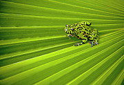 Green Frog Prints - Green Lines Of Nature Print by Jeff R Clow