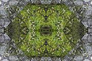 Green Mandala Print by Viktor Savchenko