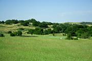 Terry Thomas - Green Meadow