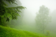 Mist Art - Green Mist by Evgeni Dinev