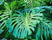 Green Foliage Prints - Green Monster  Print by Jim Chamberlain