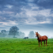 Stallion Framed Prints - Green Morn Framed Print by Evgeni Dinev