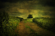 Country Scene Photos - Green On Green by Emily Stauring