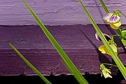 Art Ferrier Metal Prints - Green on Purple 6 Metal Print by Art Ferrier