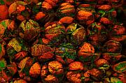 Orange Metal Prints - Green Oranges Metal Print by Ron Bissett