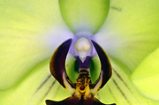 Clayton Bruster - Green Orchid Macro