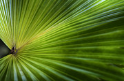 Patterned Prints - Green palm Print by Al Hurley