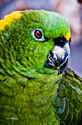 Ocularperceptions Metal Prints - Green Parrot Metal Print by Christopher Holmes