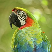 Parrot Art - Green Parrot On Green Background by Roni Delmonico