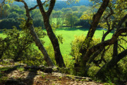 Hill Country Prints - Green Pastures Print by Robert Anschutz