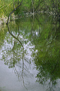 Picturesque - Green Peace - Trees Reflection by Ben and Raisa Gertsberg