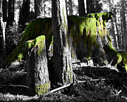 Moss Green Digital Art Prints - Green Perspective Print by Matt Hanson