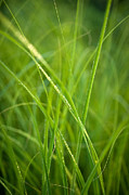 Prairie Photo Posters - Green Prairie Grass Poster by Steve Gadomski