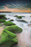 Curl Prints - Green Rocks At Curl Curl Beach Print by Yury Prokopenko