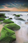 Green Rocks At Curl Curl Beach Print by Yury Prokopenko
