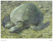 Hawaii Sea Turtle Mixed Media - Green Sea Turtle by Joseph Vittek