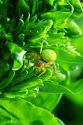 Green Spider 2.0 Print by Yhun Suarez