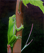 Original Oil Paintings - Green Tree Frog by Jason M Silverman