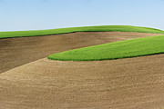 Palouse Photos - Green Wheat Atop Contoured Fields by Donald E. Hall
