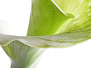 Photo Images Mixed Media - Green White Flower Leaves Abstract l - Macro Flowers Fine Art Photography by Artecco Fine Art Photography - Photograph by Nadja Drieling