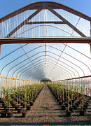 Sliding Doors Prints - Greenhouse in rural Oregon. Print by Gino Rigucci