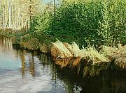 Beaver Pond Paintings - Greenview Beaver Pond by Allan OMarra