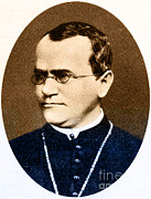 Genes Art - Gregor Mendel, Father Of Genetics by Science Source