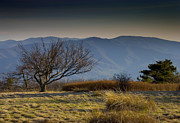 Gregory Prints - Gregory Bald - Great Smoky Mountains National Park - Tennessee Print by Brendan Reals