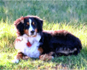 Colleen Taylor - Greta Bernese Mountain...