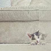 Peeking Posters - Grey And White Cat Peeking Around Corner Poster by Cindy Prins