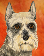 Watercolor Print Framed Prints - Grey and white Schnauzer Framed Print by Cherilynn Wood