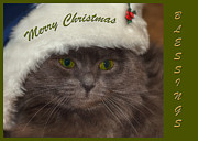 Happy Cat Posters - Grey Cat Santa 2 Poster by Joann Vitali