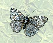 Insects Originals - Grey Cracker Butterfly by Mindy Lighthipe