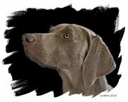 Weimaraner Posters - Grey Ghost Poster by Larry Linton
