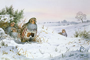 Xmas Art - Grey Partridge by Carl Donner