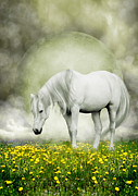Grey Horse Photos - Grey Pony in Field of Buttercups by Ethiriel  Photography