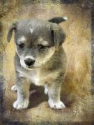 Grey Puppy Print by Svetlana Sewell